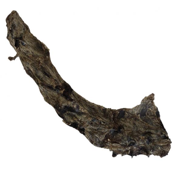 Rehnackenknochen