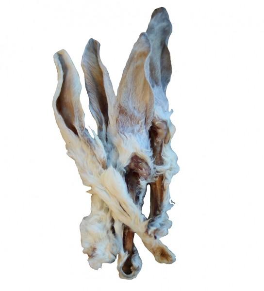 Kaninchenohr